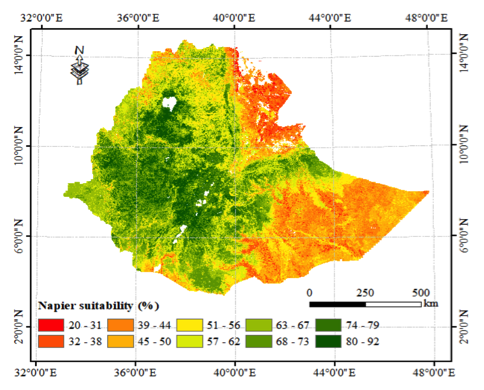 A preliminary mapping of land suitable for irrigated Napier production. The most suitable area was assessed to be 92 percent suitable, whereas the least appropriate area was assessed to be only 20 percent suitable. Land is considered suitable at 80 percent and above.